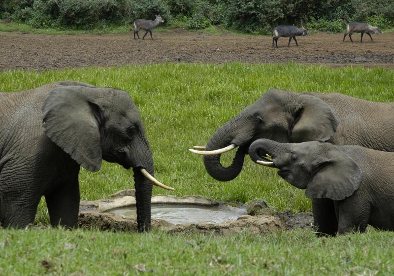 africa safari masai mara 35.jpg