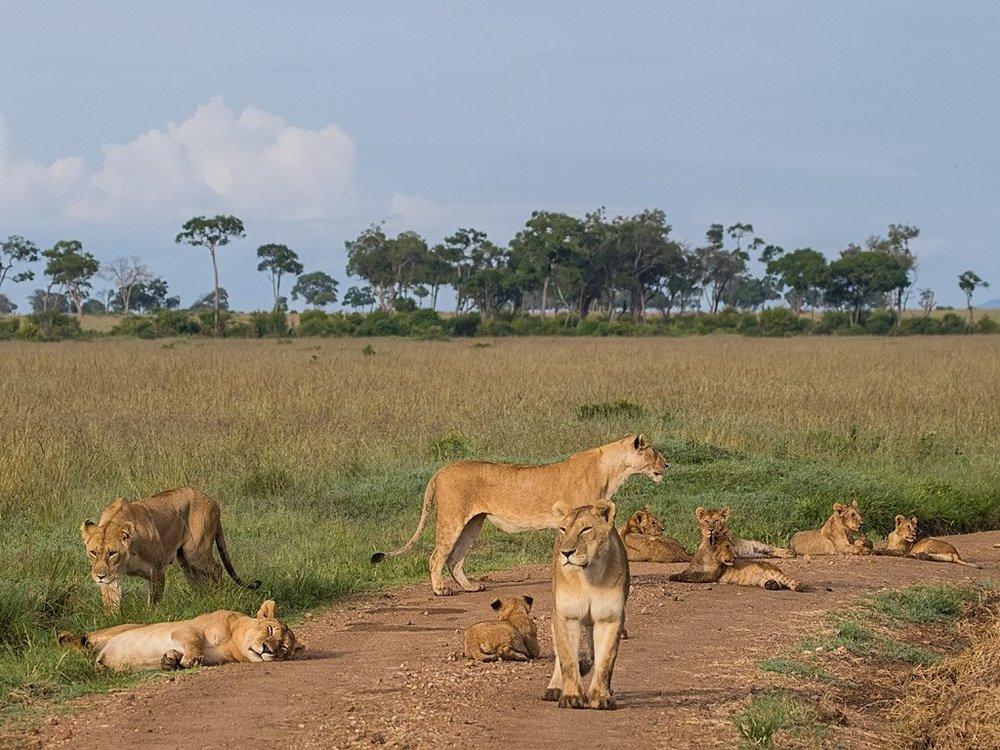 africa safari masai mara 30.jpg