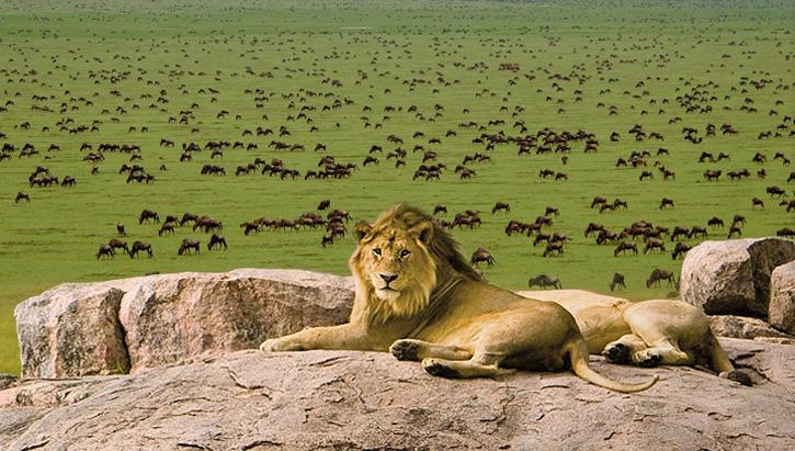 12 PREMIUM DAY ULTIMATE EAST AFRICA - See the best Tanzania & Kenya•Amboseli National Park • Ngorogoro Crater • Serengeti• Masai Mara