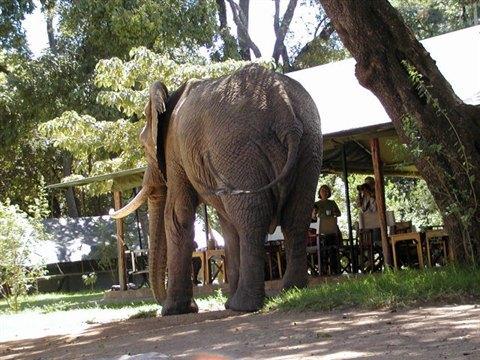 africa safari masai mara 2.jpg