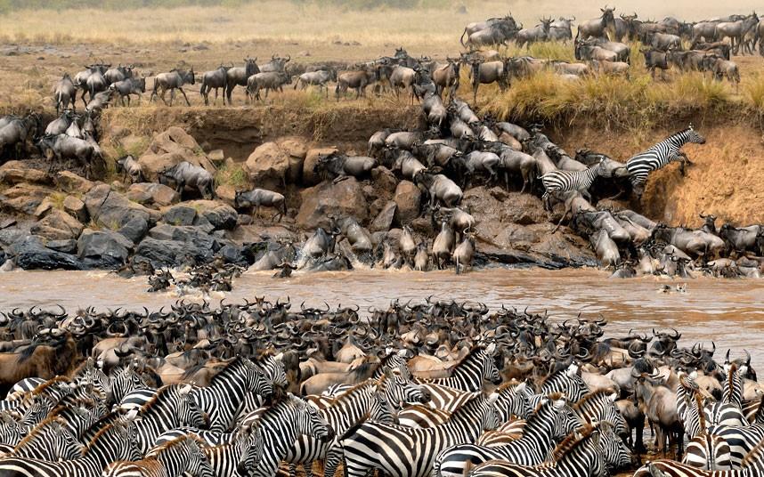 11 DaY GREAT MIGRATION***** - Serengeti & Masai Mara Reserves