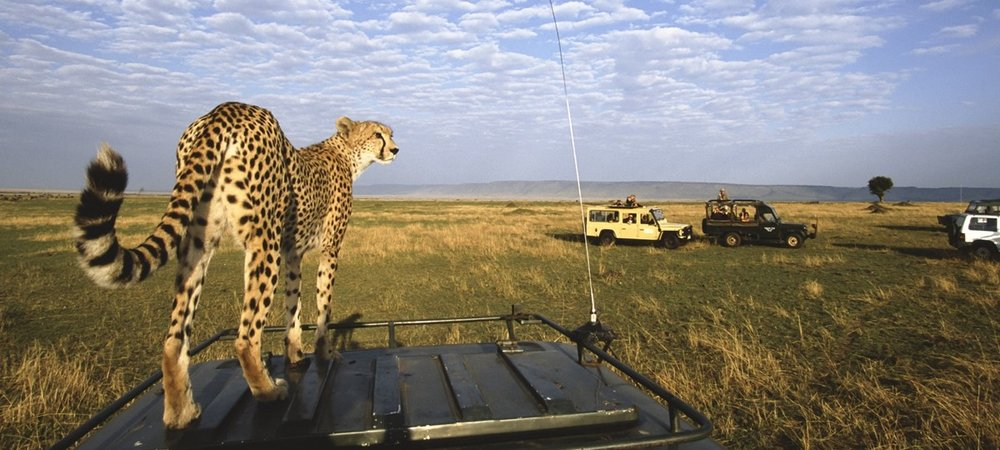 africa safari cheetah.jpg
