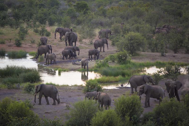 africa safari Vic falls accommodation106.jpg