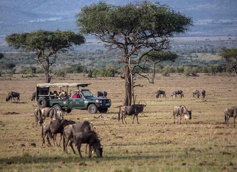 safari masai mara119.jpg