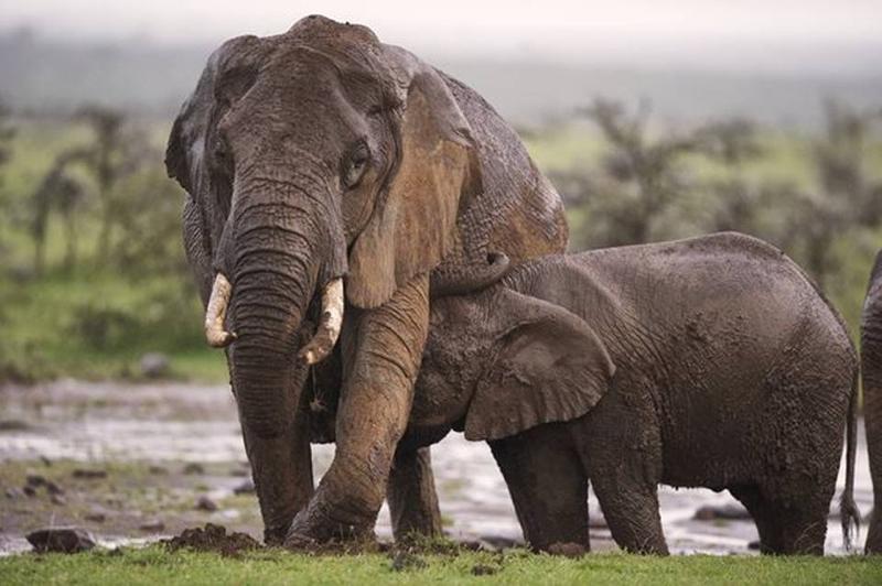 safari masai mara118.jpg