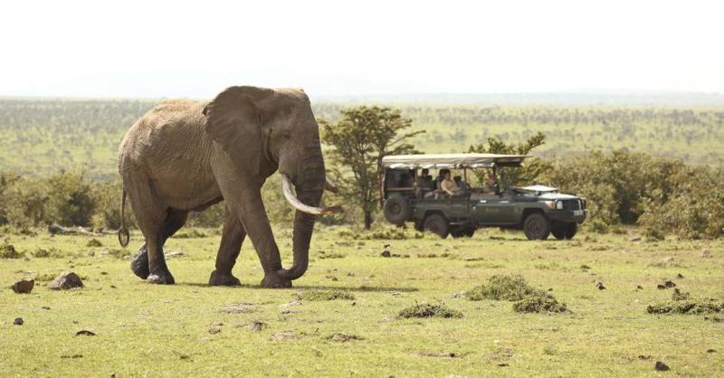 safari masai mara117.jpg