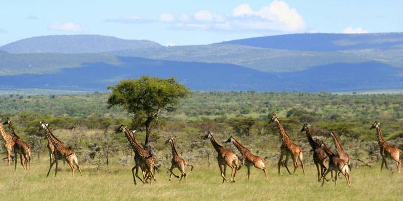 safari masai mara115.jpg