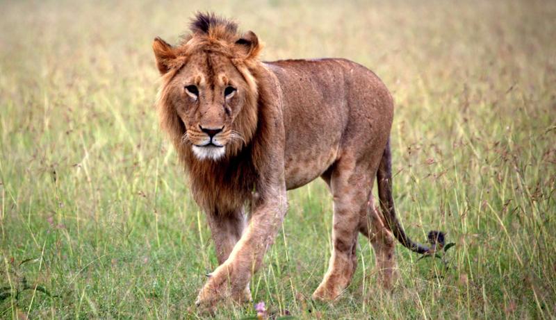 safari masai mara114.png