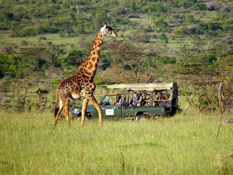 safari masai mara105.jpg