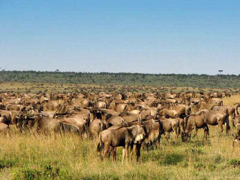 safari masai mara101.jpg