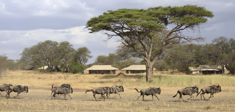 Kenya30.jpg