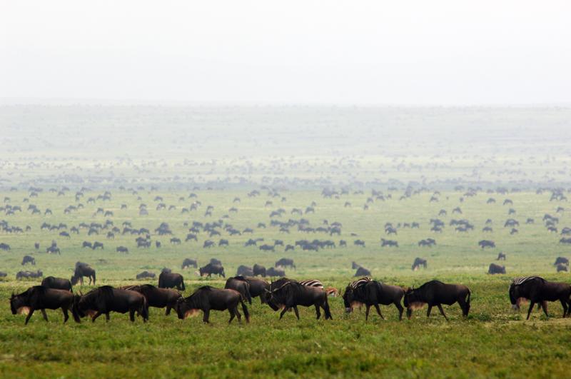 Kenya19.jpg