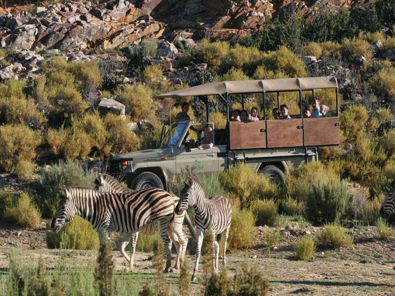 DAY 6,7,8,9:SAFARI DAYS - Located within a 2-hour drive of Cape Town, Aquila Private Game Reserve offers a safari experience with mountains and landscape views.