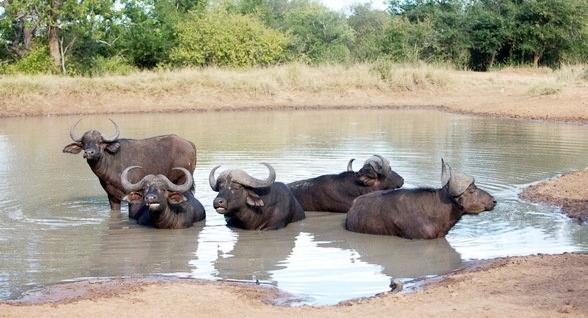 6 DAY ULTRA PREMIUM KRUGER EXPERIENCE - • Big 5 Game viewing • Kapama Private Game Reserve• Kruger Park Game Reserve5 DAYS / 6 NIGHTS