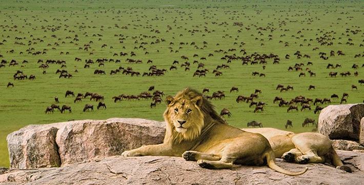 HIGHLIGHTS - *Masai Mara Game Reserve*Serengeti*Ngorogoro Crater