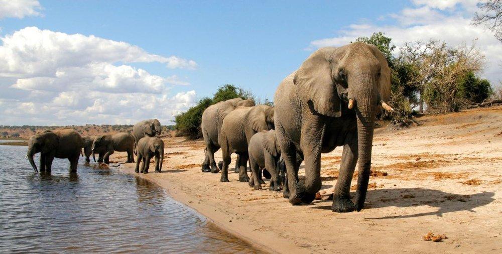 16 DAY PREMIUM SAFARI***** - • Private Game Reserve • Cape Town tours & scenes • Victoria Falls • Elephant back rides• Chobe River experience16 DAYS / 15 NIGHTS