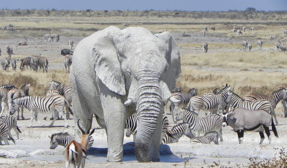 HIGHLIGHTS - *Etosha National Park