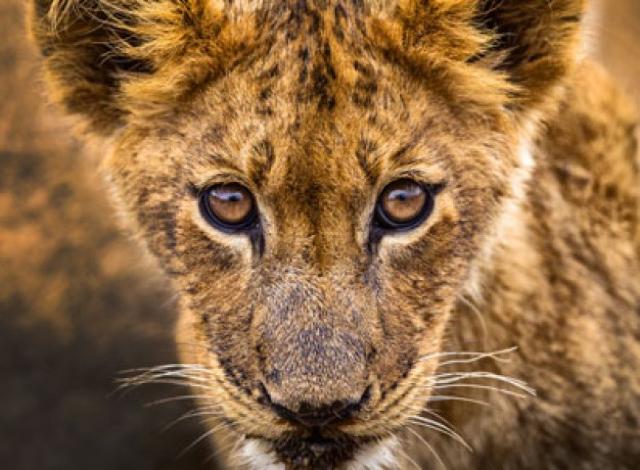 Kruger057.jpg
