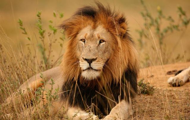 Kruger053.jpg