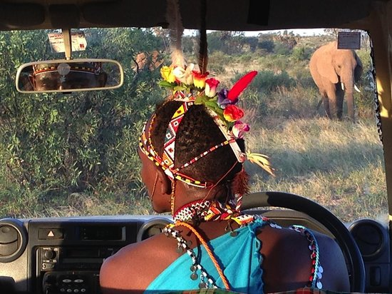 Elephant_watch17.jpg