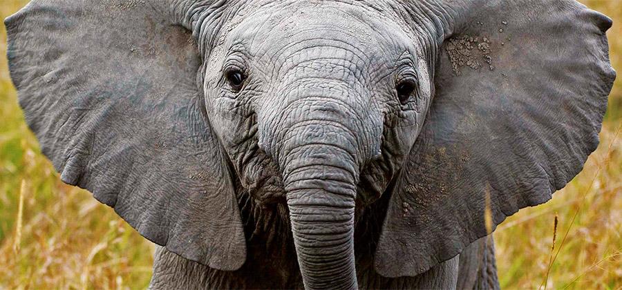 Elephant_Watch9.jpg