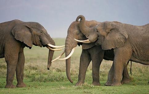 11 Day LUXURY TANZANIA & KENYA - • Tarangire National Park • Ngorogoro Crater •Northern Serengeti • Masai Mara Game Reserve