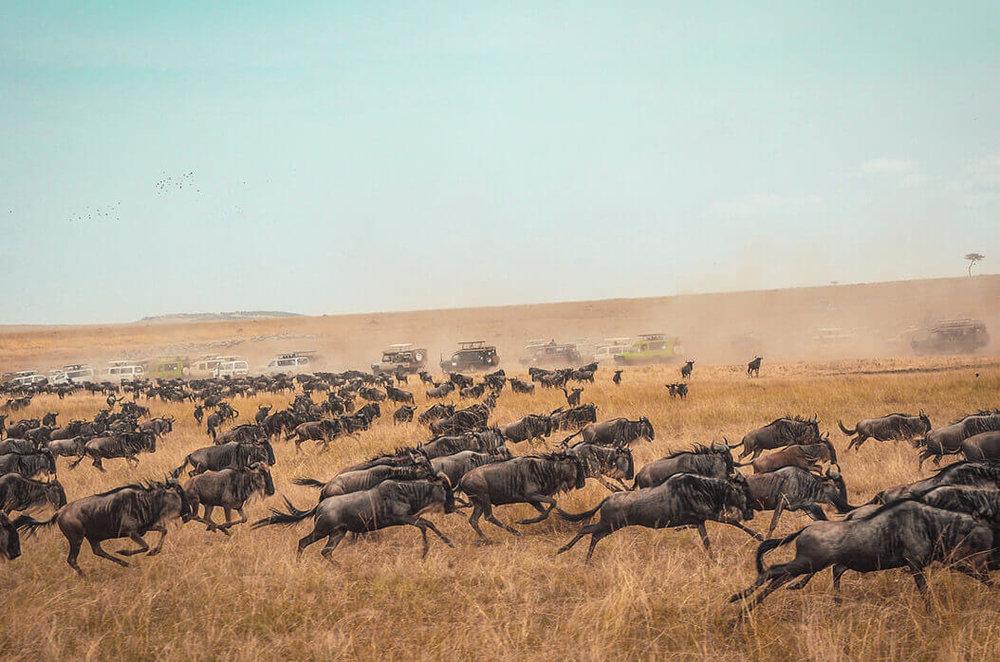 Kenya8.jpg