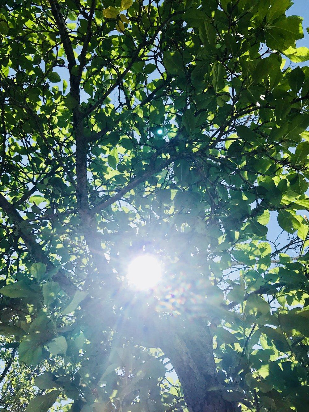 Lader du solen skinne på dine medarbejdere? Trives de og udvikles de?
