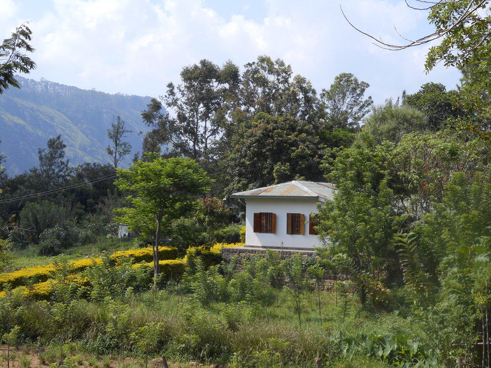 Yoga retreat Sri Lanka, the view from the venue at Amba Estate