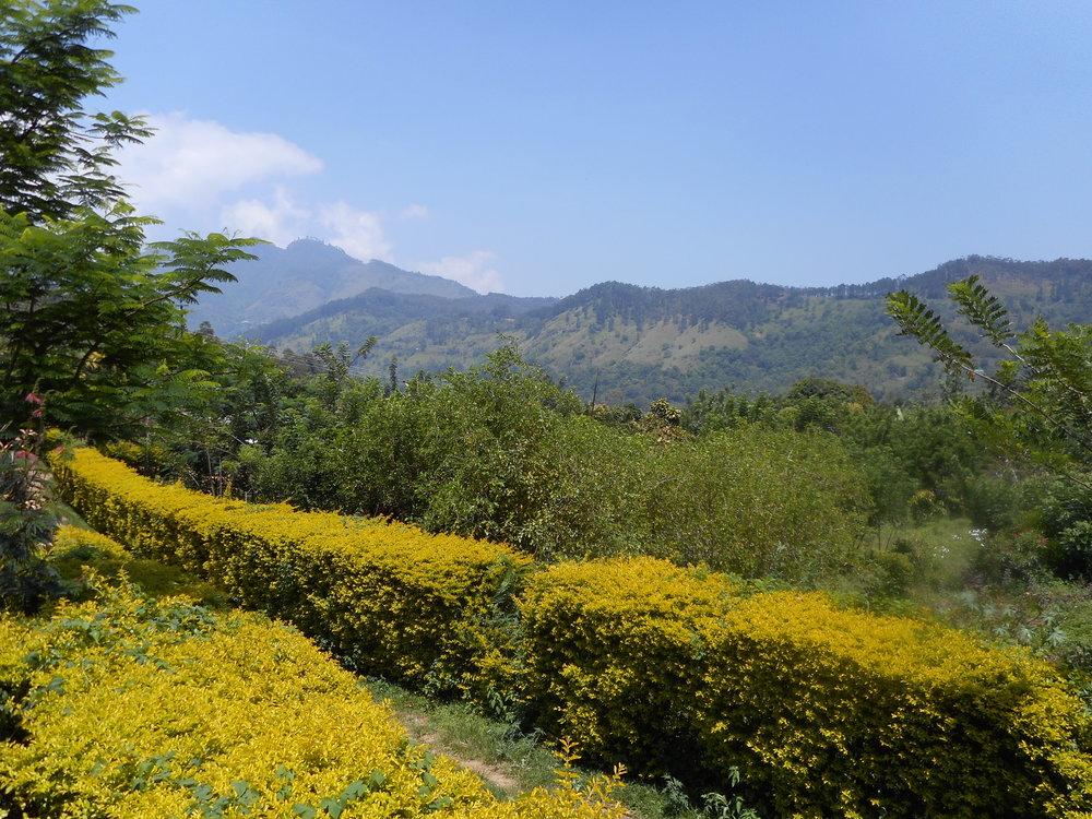 Writing retreat Sri Lanka, the view at Amba Estate