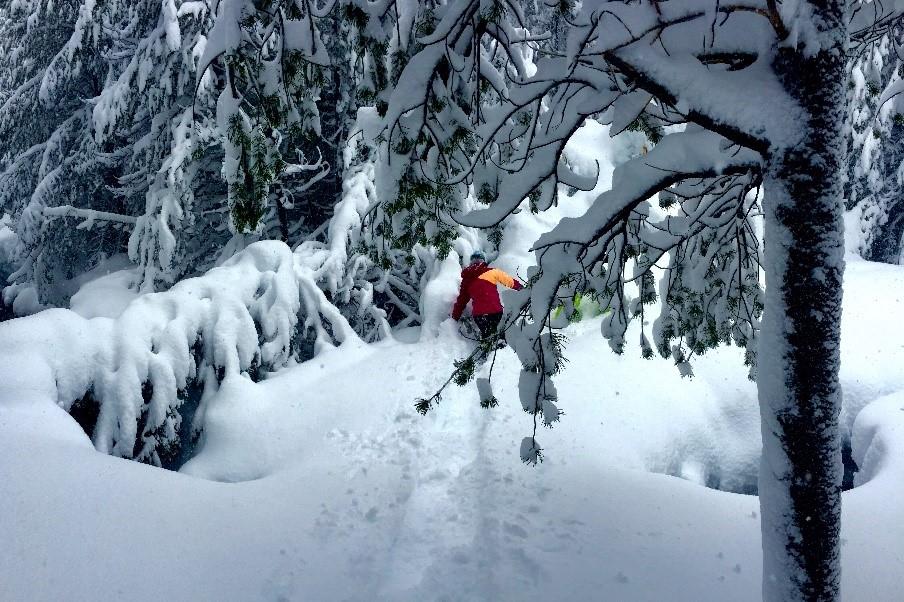 Snowshoe8.jpg