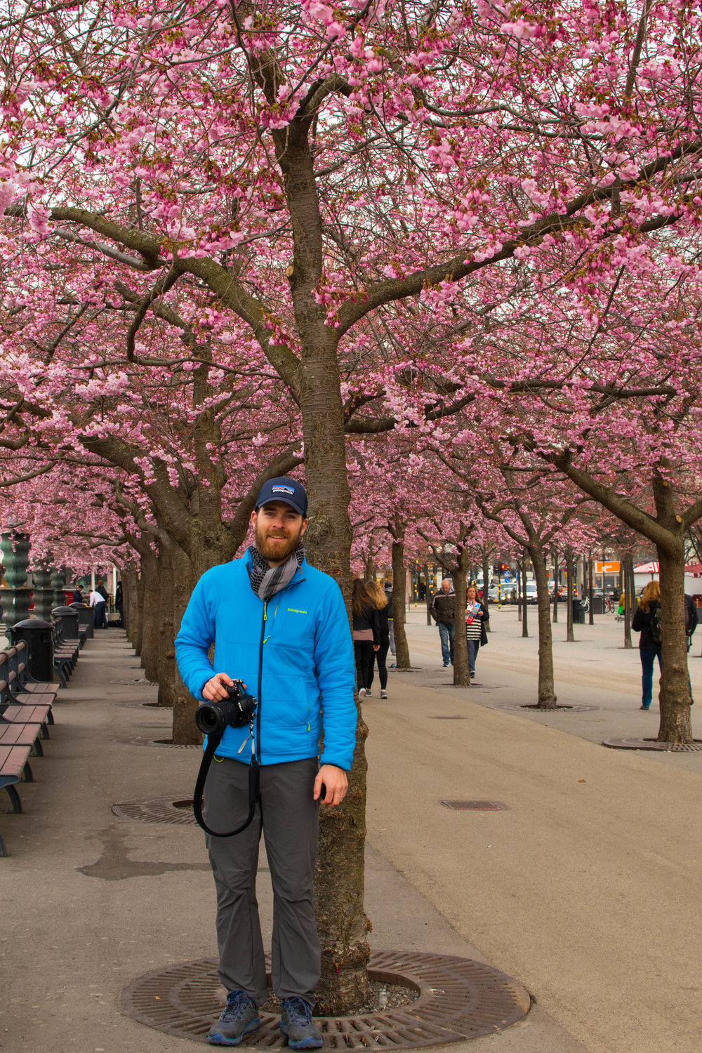 Nolan under cherry blossoms in Stockholm, Sweden