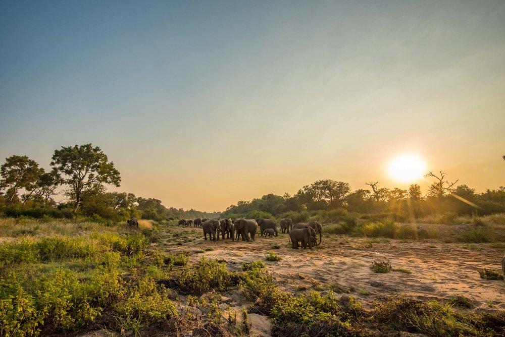 Morning Elephants
