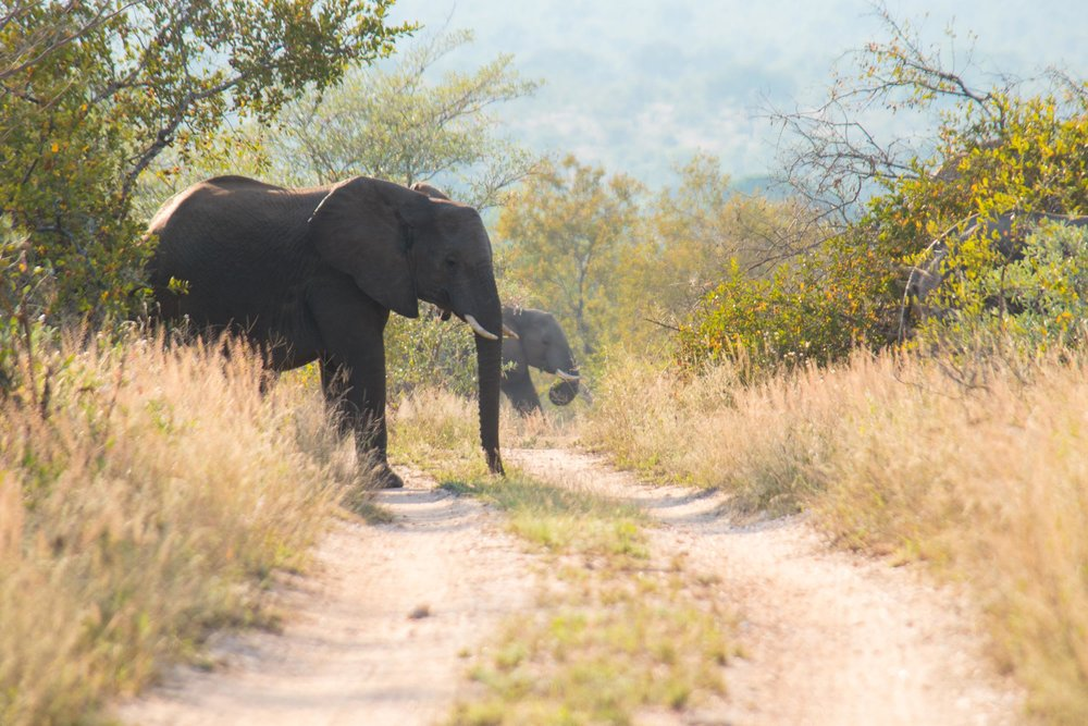 20170506South Africa-099.jpg