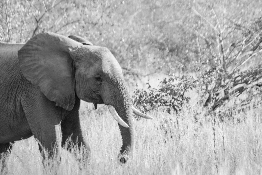 20170506South Africa-104.jpg