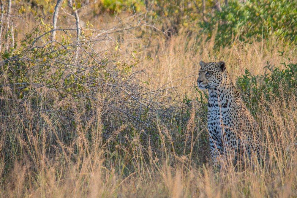 20170506South Africa-139.jpg