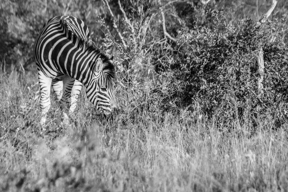 20170506South Africa-259.jpg