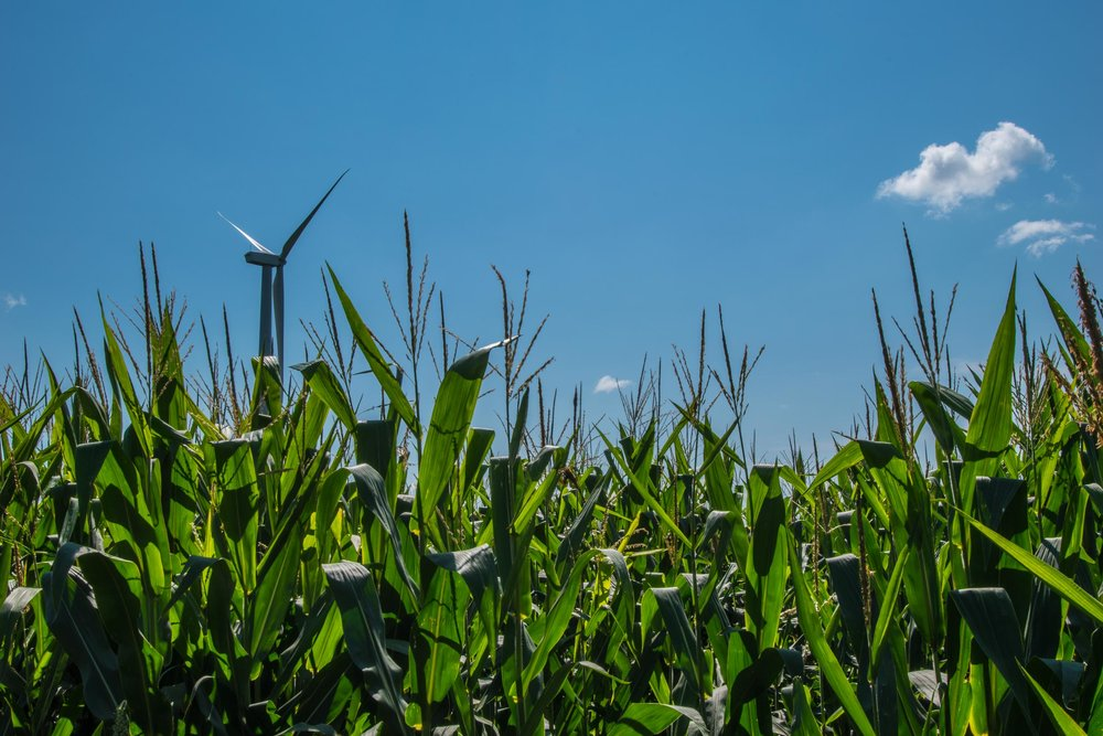 Corn and wind turbine