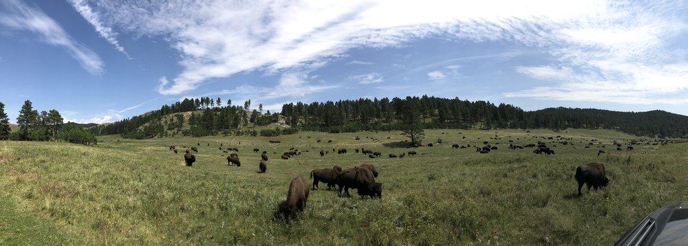 Endless Bison...