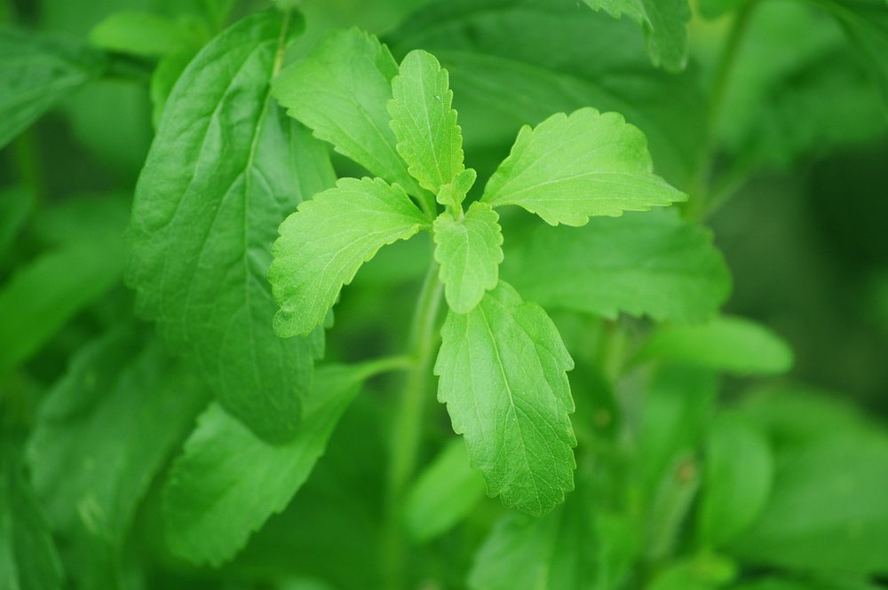 stevia-74187_1280.jpg