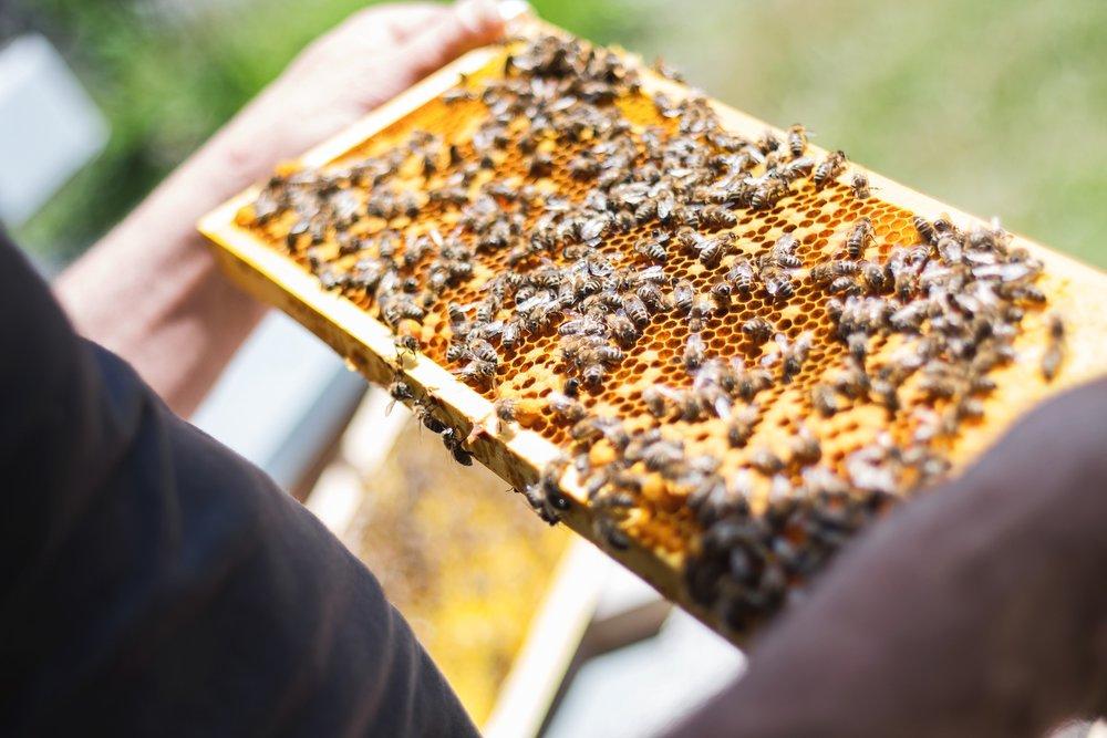 bees-2368228_1920.jpg