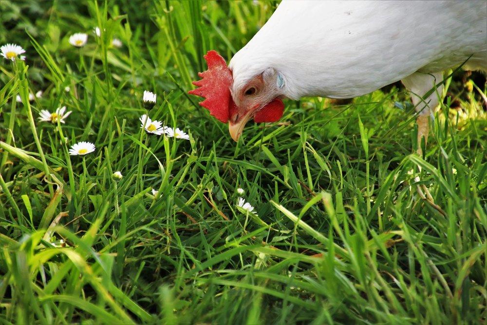 lawn-3347050_1920.jpg