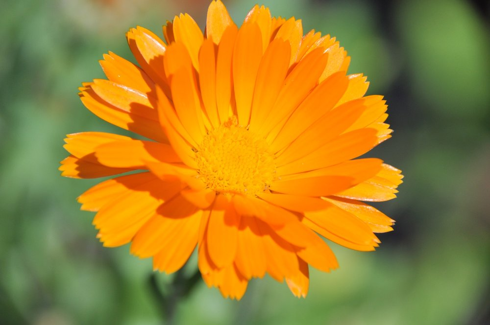 nature-3300941_1920.jpg