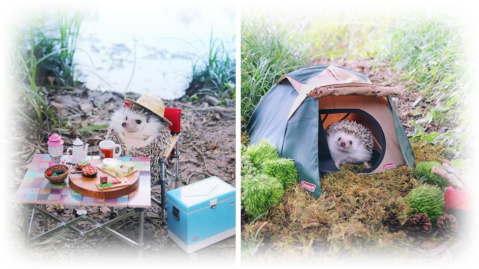 hedgehogcamp.png