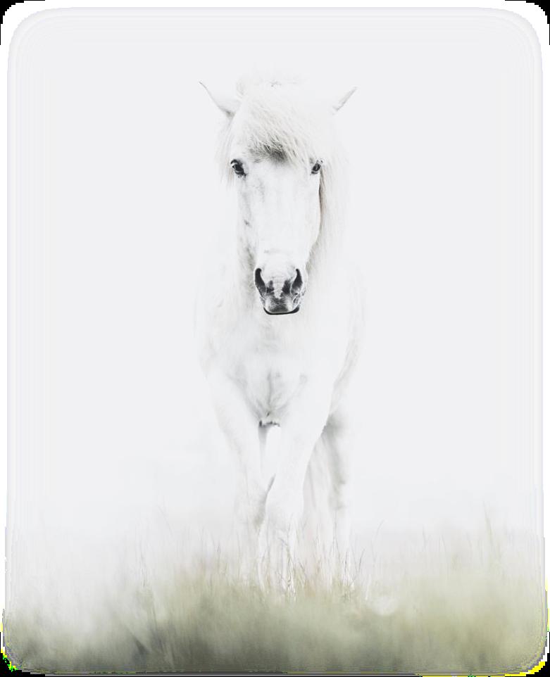 mystichorse.png