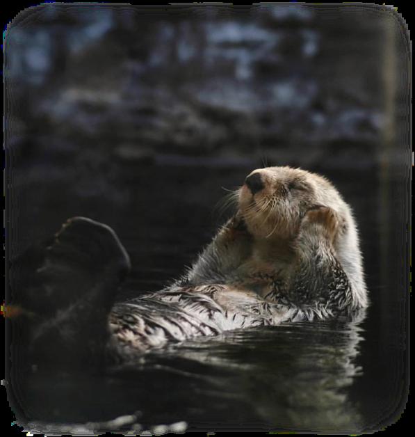 beaver.png