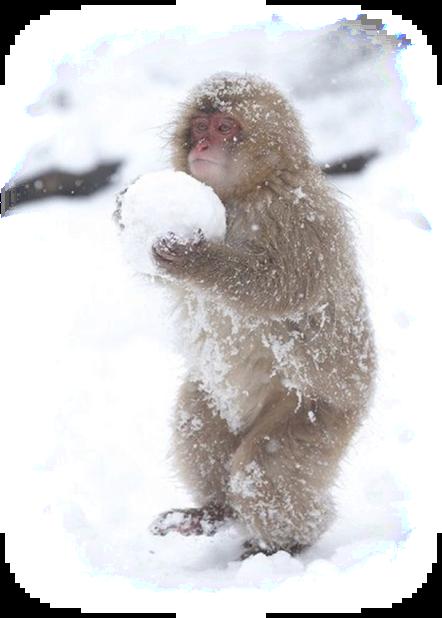 monkeysnow.png
