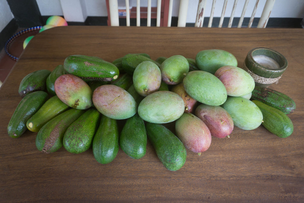 "Todays mangos and avocados. When i think about this property and the natural beauty I'm reminded of John 4:38, ""I sent you to reap what you have not worked for. Others have done the hard work, and you have reaped the benefits of their labor."" What a blessing!"