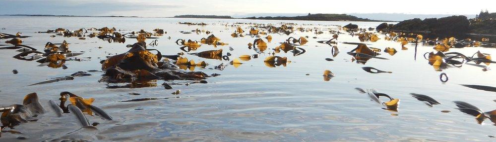Kelp Bed.jpg