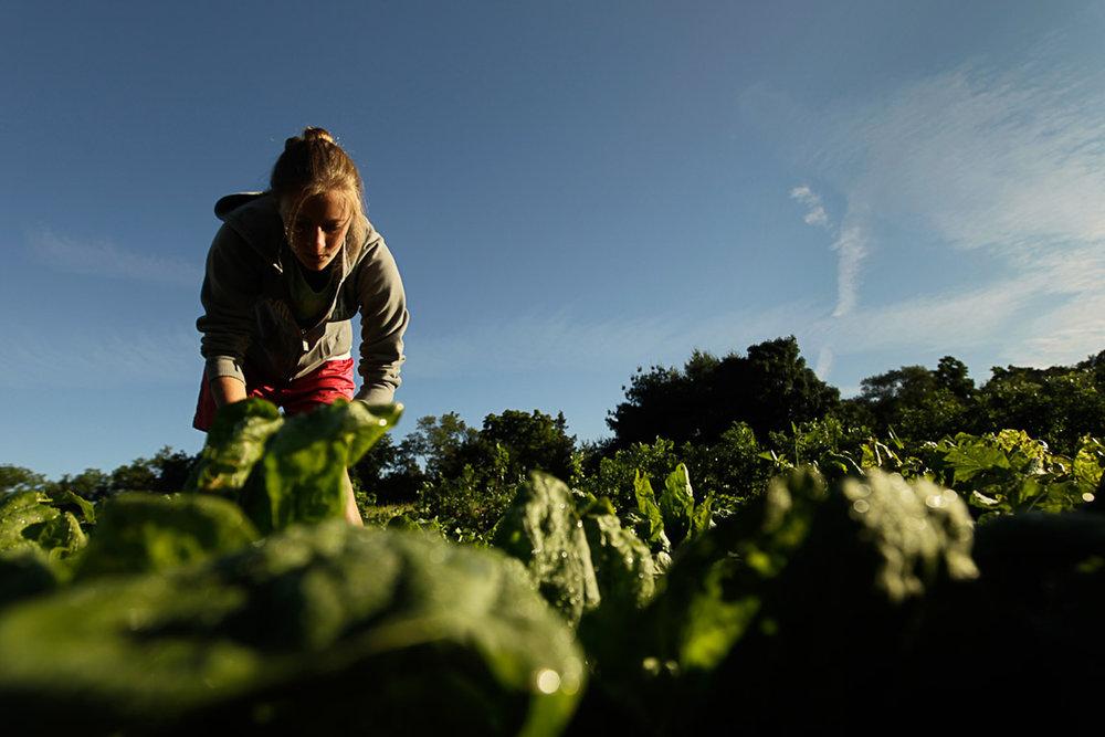 New_Jersey_farming_109A.JPG